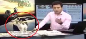 بالفيديو ...قط يقتحم برنامجاً تلفزيونياً على الهواء مباشرة ويسبب الحرج للمذيع!