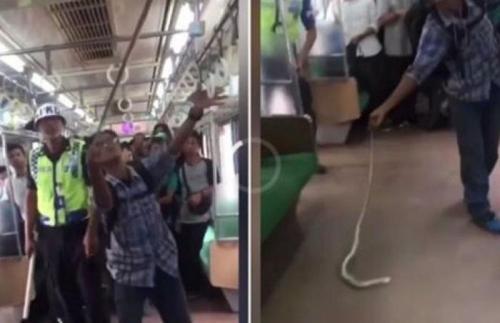 بالفيديو ..  شاهد رجل يصطاد ثعباناً داخل قطار مليء بالمسافرين