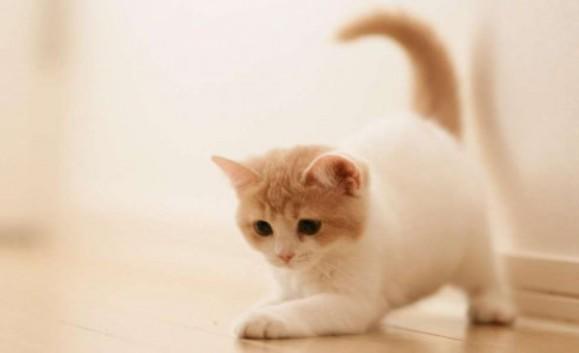 قط يغسل في غسالة وينجو