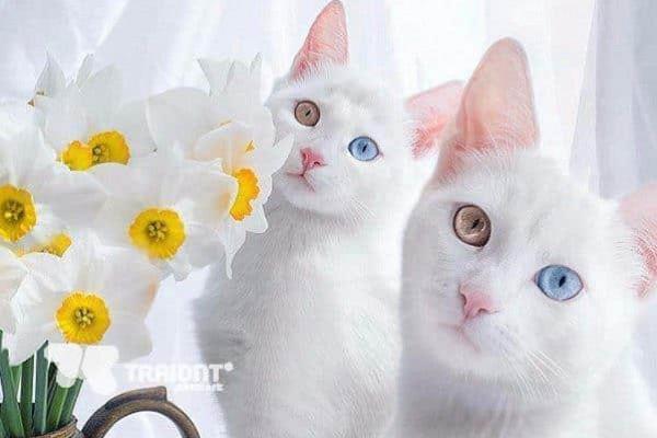 بـ6 أصابع وعيون مختلفة .. معلومات لا تعرفها عن أشهر قطة على السوشيال ميديا