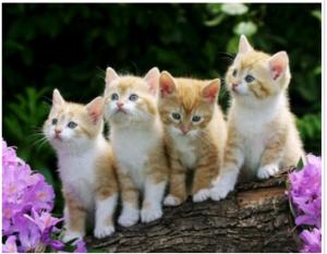 معجزة تحدث عنها رسول الله عن القطط من 1400 عام وأثبتها العلماء فى العصر الحديث