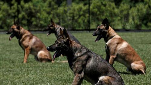 الاستخبارات الأمريكية تقيل كلبة من العمل لهذا السبب!
