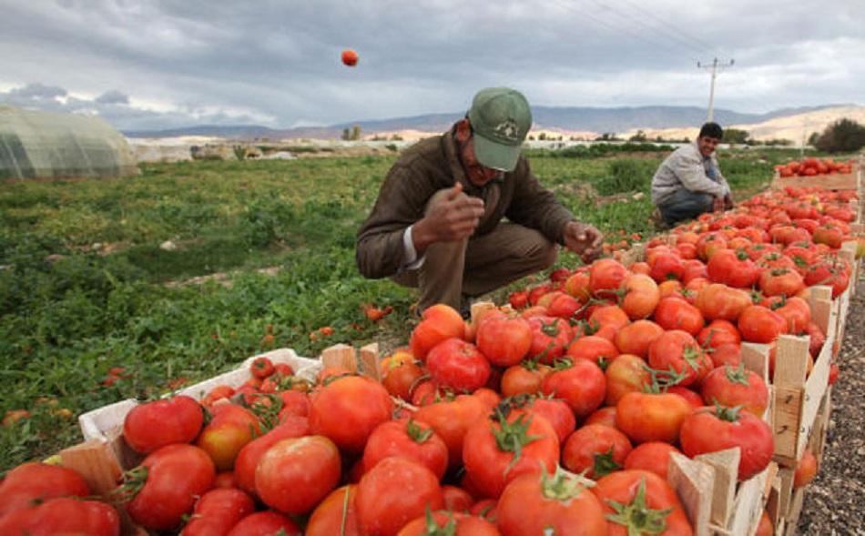 """الحياري : خطة لاقراض 9 آلاف مزارع بقيمة 49 مليون دينار  .. """"تفاصيل"""""""