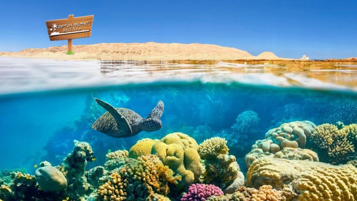 بالفيديو والصور   ..  اكتشف جزر الجفتون السياحية
