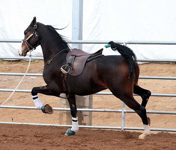 الرصيفة : حصان هائج يقتل ستيني