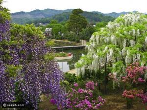 حديقة اشاكيكا في اليابان وأبرز معالم السياحة في اليابان