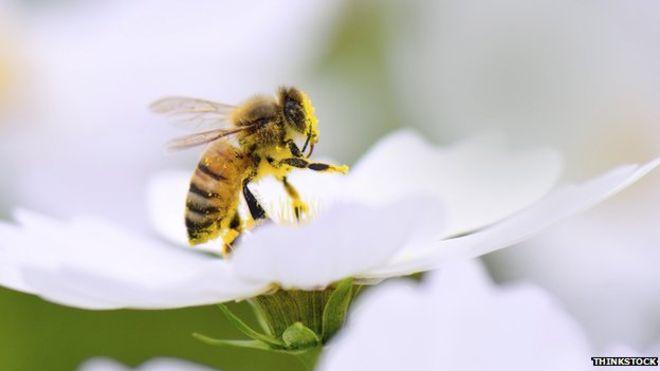 تفسير حلم النحل في المنام