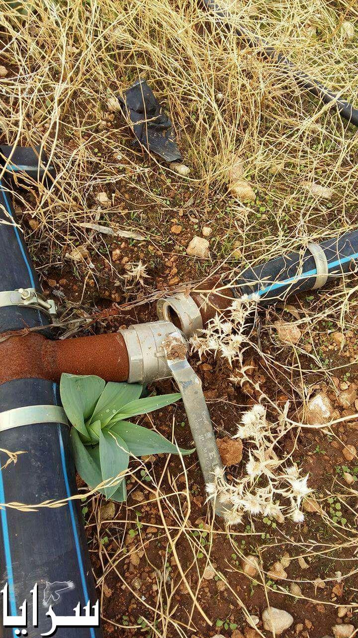 بالصور ..  عجلون :مجهولون يقدمون على تقطيع الاشجار الحرجية و برابيش الري في مشروع مراعي راجب