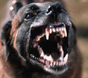 ظاهرة إ نتشار الكلاب الضاله في لواء القصر الى متى؟