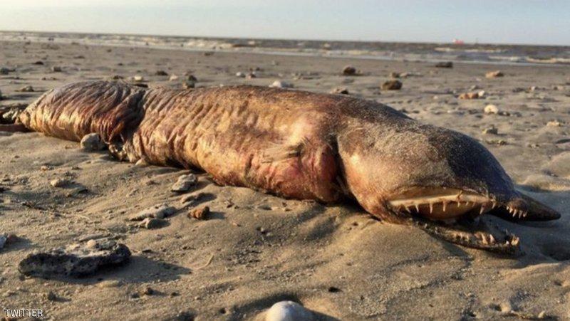 ظهور مخلوق غريب جرفته مياه الفيضانات التي خلفها اعصار هارفي ..  صورة