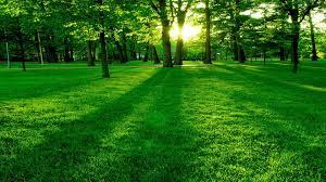 تفسير حلم رؤية الارض الخضراء في المنام