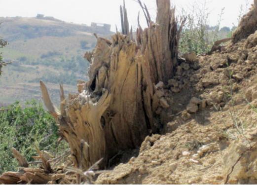 الاعتداء والجفاف يحيلان جبالا وأودية بغابات الطفيلة لمناطق شبه جرداء