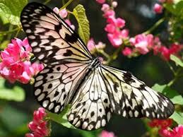 تفسير حلم رؤية الفراشة في المنام لابن سيرين