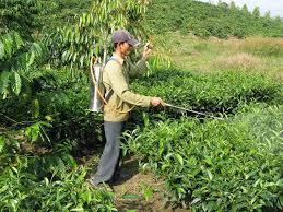 الزراعة تقرر استخدام المبيد المحاصيل image.php?token=3aab0dda442a1675fc80e23188f075b5&size=