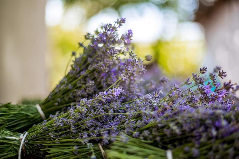 فوائد نبات الخزامى الصحية ..  هل تعرّفت إليها؟