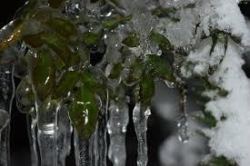 اجواء باردة في معظم المناطق و تشكل الانجماد والصقيع