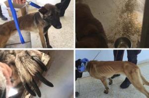 صور صادمة  .. موت عشرات الكلاب البوليسية بالاردن المجهزة للكشف عن المتفجرات بسبب الاهمال وقلة التغذية