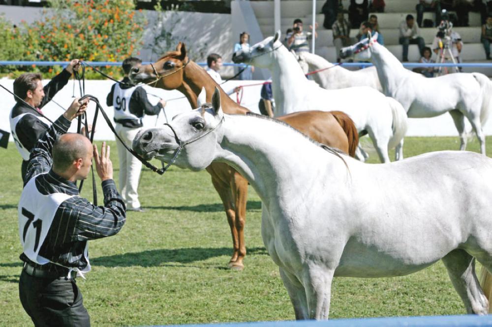 بطولات الشرق الأوسط للخيول العربية الاصيلة تبدأ اليوم