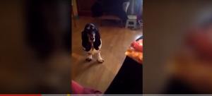 بالفيديو: كلب يرقص للحصول على قطعة بيتزا من صاحبه
