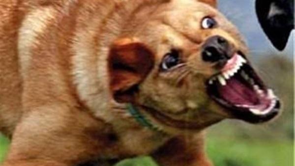 سجن أجنبي 6 شهور وابعاد خادمته اثر هجوم  كلب على اطفال في الامارات