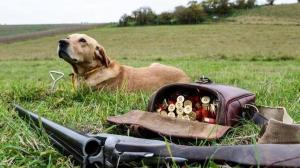 كلب يطلق النار على صاحبه في فرنسا