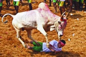 الهند تتجه لحظر ذبح الأبقار
