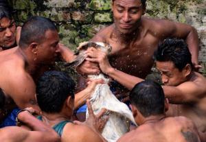 """صور مؤلمة: تمزيق الماعز """"بالأيدي"""" في أكثر المهرجانات وحشية بالعالم!"""