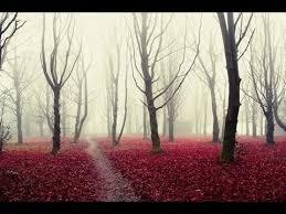 بالفيديو  ..  تعرف على اجمل غابات العالم واكثرها غموضاً