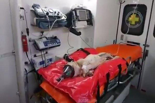 """بالفيديو ..  لاجئ سوري ينهي حياة كلب بطريقة """"بشعة"""""""