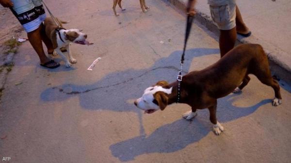 وفاة مروعة  ..  كلاب شرسة تنهي حياة سيدة بالبرازيل