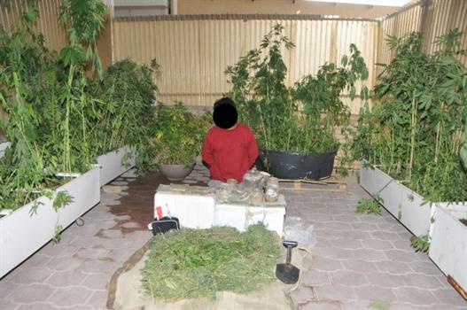 القبض على اردني يزرع الماريجوانا بمنزله في الكويت