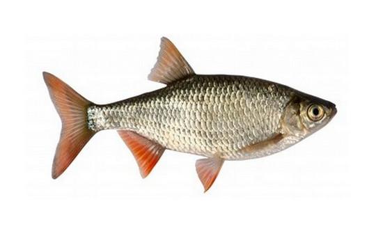 تفسير حلم تنظيف السمك فى المنام