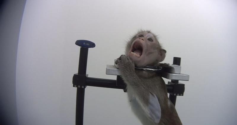 بعد فضيحة هزت الأوساط العلمية ..  ألمانيا تغلق معملًا يعذّب الحيوانات