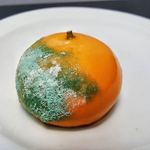 شاهدوا  ..  ما قصة تصدر هاشتاغ غيث مروان و البرتقالة المعفنة الترند في الأردن؟