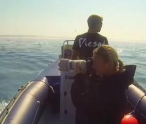 بالفيديو .. هجرة أعداد كبيرة من الحيتان والدلافين