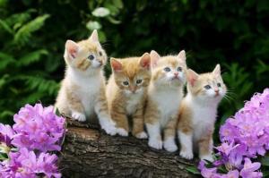 مفاجأة للسيدات هل تفرحين لرؤية القطط في المنام؟ اليكم التفسير الحقيقي لهذا الحلم
