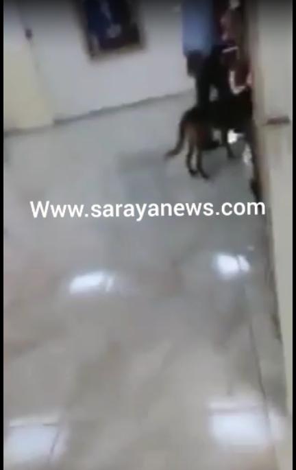 بالفيديو ..  كلاب بوليسية لتفتيش مبنى ومكاتب موظفي بلدية اربد قبيل زيارة الرزاز