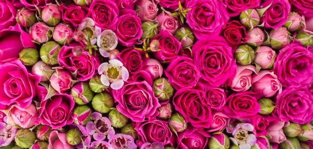 تفسير الورد في المنام