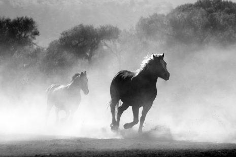 تفسير حلم رؤية حصان وخيل هائج