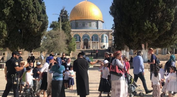 84 مستوطنًا يقتحمون المسجد الأقصى