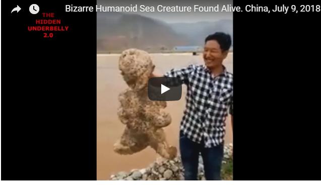 العثور على كائن بحري غامض يشبه الإنسان .. فيديو