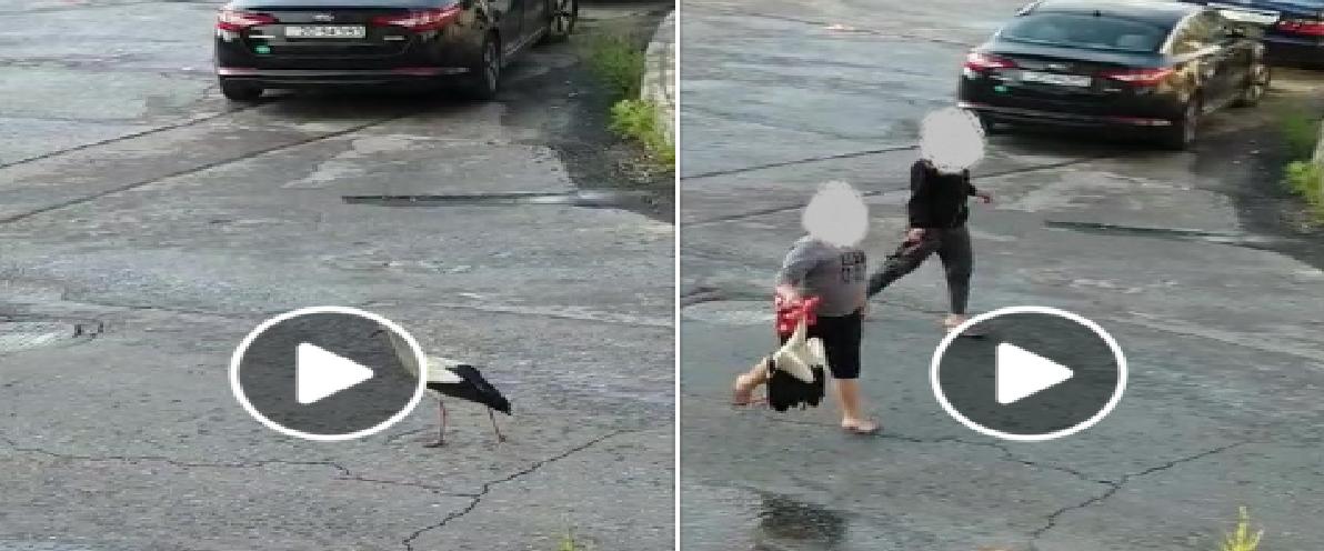 """بالفيديو  ..  طائر """"نادر"""" يظهر في عمان أثناء الحظر الشامل و مواقع التواصل تشتعل حزناً على """"ابو السعد"""""""