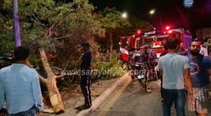 بالصور  .. العقبة : اصطدام مركبة بشجرة داخل جزيرة وسطية وانباء عن أطلاق نار على السائق