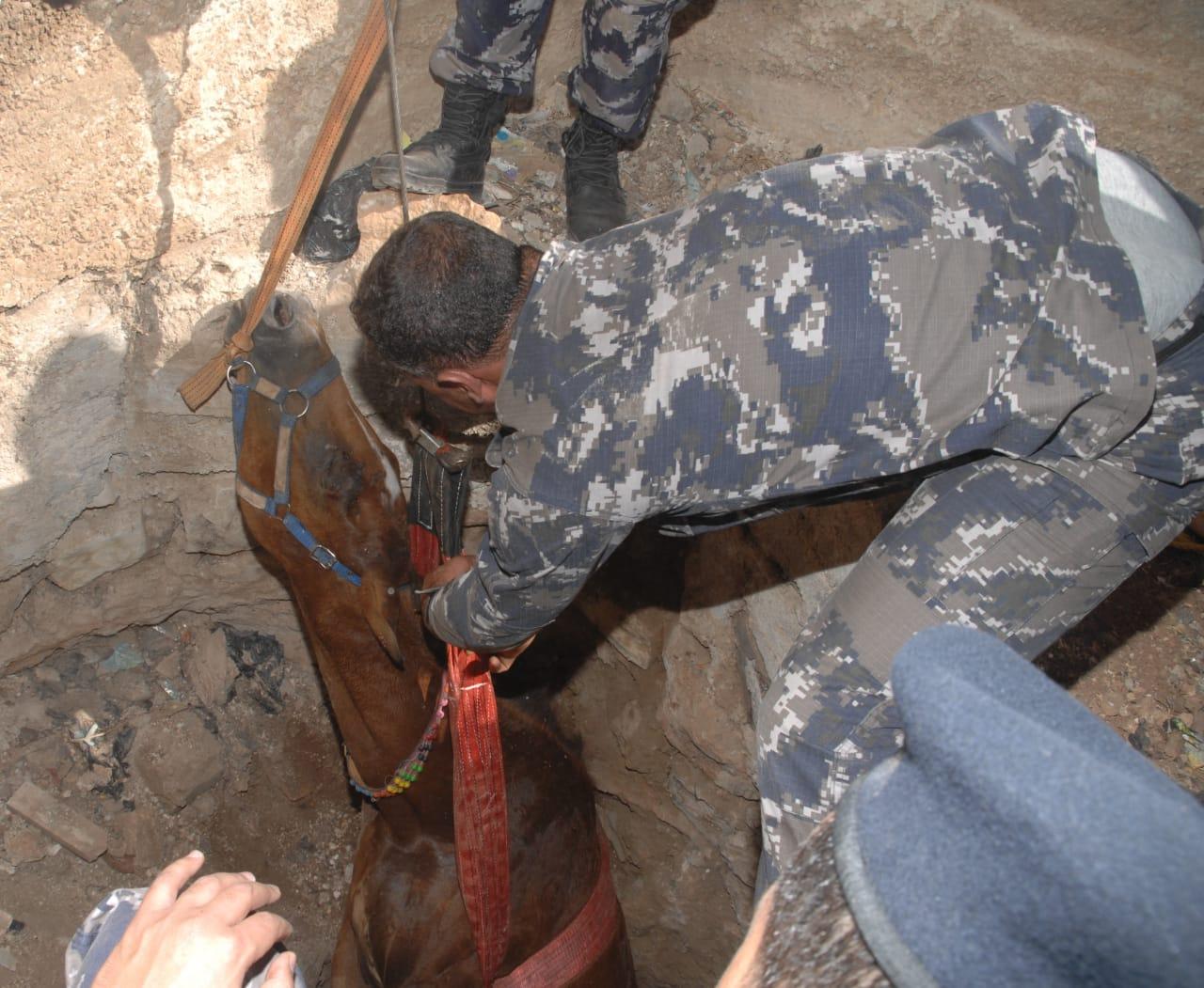 إنقاذ حصان سقط داخل حفرة في محافظة اربد  ..  صور