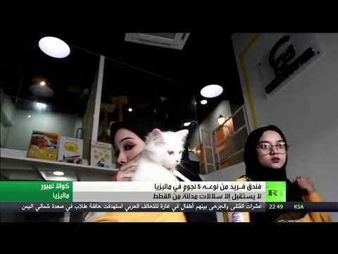 بالفيديو ..  انشاء فندق لسلالات القطط المدللة