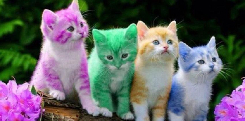 تعرف على تفسير رؤية القطة وأنواعها فى المنام