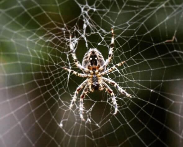 ماهو تفسير حلم رؤية العنكبوت في المنام ؟