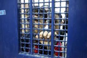 4 ايام على اضراب الاسيرين العيساوي وصنوبر