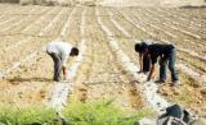 تخفيض أسعار الفائدة على القروض الزراعية