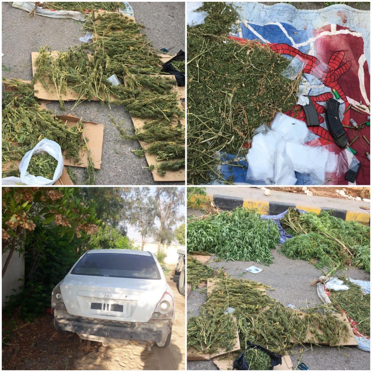 بالفيديو  ..  القبض على (8) من مروجي مخدرات وضبط 1500 شتلة ماريجوانا في الشونة الجنوبية